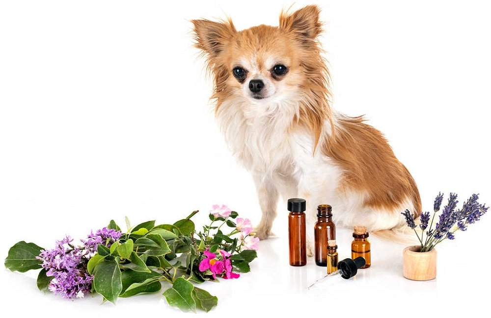 Are Fragrance Oils Safe for Dogs